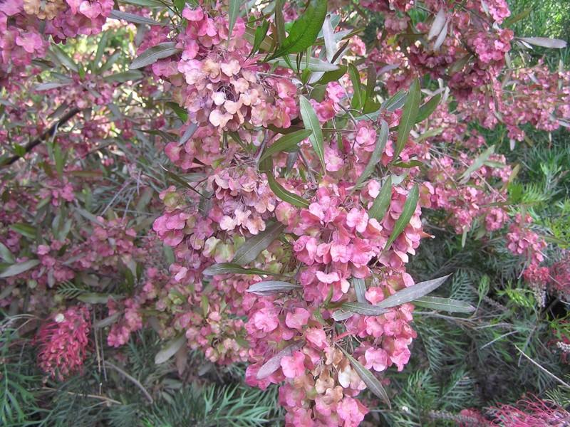Комнатные растения и цветы Женский сайт wwwInMomentru