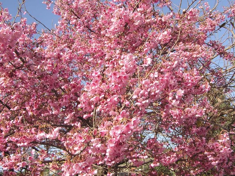 Flora-tree-P1